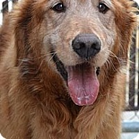 Adopt A Pet :: Mason - Foster, RI