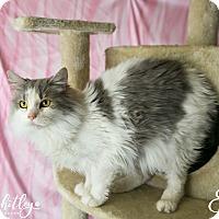 Adopt A Pet :: Ella - Columbia, TN