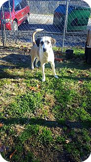 Collie Mix Dog for adoption in Fairmont, West Virginia - Cranberry