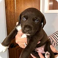 Adopt A Pet :: Calvin - North Brunswick, NJ
