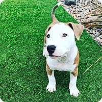 Adopt A Pet :: Nalnu - San Diego, CA