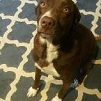 Adopt A Pet :: Dixie - Hopkinsville, KY