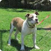 Adopt A Pet :: Mickey - Jackson, TN