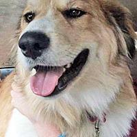 Adopt A Pet :: Kaiser in NY - Beacon, NY