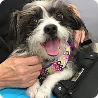 Adopt A Pet :: TUNA - Tucson, AZ