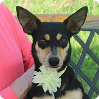 Adopt A Pet :: Melinda-PENDING - Garfield Heights, OH
