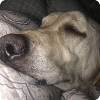 Adopt A Pet :: Pippen - Charleston, SC