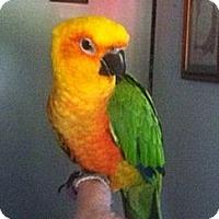 Adopt A Pet :: Rainbow - Lenexa, KS