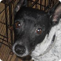 Adopt A Pet :: Mushie - Charlotte, NC