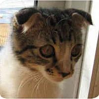 Adopt A Pet :: Rob Roy - Davis, CA