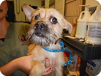 Terrier (Unknown Type, Small) Mix Puppy for adoption in Richmond, Virginia - Jena
