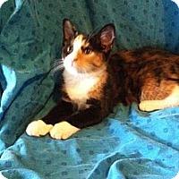 Adopt A Pet :: Celeste - Chesterfield, VA