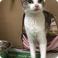 Adopt A Pet :: Rose - New York, NY