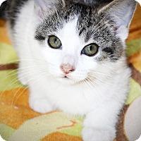 Adopt A Pet :: Robin - Xenia, OH