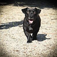 Adopt A Pet :: Jason Lee - Folsom, LA