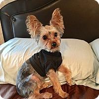 Adopt A Pet :: Stanley - Bunnell, FL