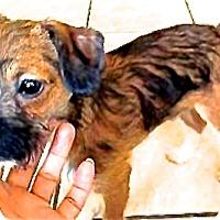Adopt A Pet :: Roz - San Diego, CA