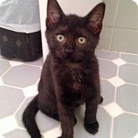 Adopt A Pet :: Wisteria - River Edge, NJ