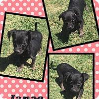 Adopt A Pet :: Janae - Scottsdale, AZ