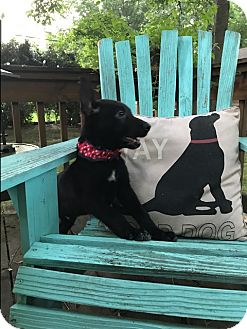 German Shepherd Dog Mix Puppy for adoption in Portland, Maine - Fletcher