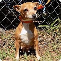 Adopt A Pet :: Jolly - Kailua-Kona, HI