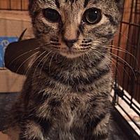 Adopt A Pet :: Checkers - Somerset, KY