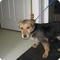 Adopt A Pet :: Betty - Rocky Mount, NC