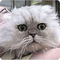 Adopt A Pet :: Matthew - Davis, CA