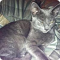 Adopt A Pet :: Joe Walsh - Strongsville, OH