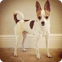 Adopt A Pet :: Elliot - Spring Branch, TX