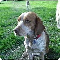 Adopt A Pet :: Lucky Lucy - Phoenix, AZ