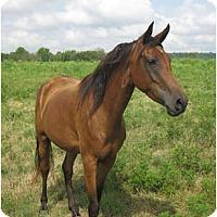 Adopt A Pet :: Sierra - Lyles, TN