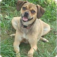 Adopt A Pet :: Tammy - Plainfield, CT