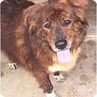 Adopt A Pet :: Candie,FL - Miami Beach, FL