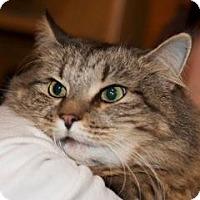 Adopt A Pet :: Mischief - Westfield, MA