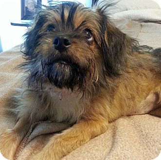 Terrier (Unknown Type, Small) Mix Dog for adoption in Huntsville, Alabama - Fancy