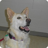 Adopt A Pet :: Ivory - Lockhart, TX