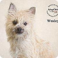 Adopt A Pet :: Wesley - Phoenix, AZ