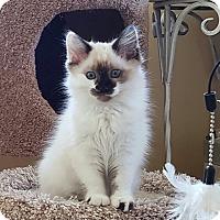 Adopt A Pet :: Buttercup - San Fernando Valley, CA