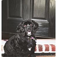 Adopt A Pet :: Pippa -Adopted! - Kannapolis, NC