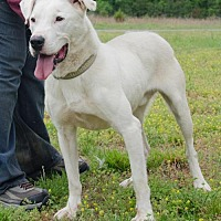 Shepherd (Unknown Type) Mix Dog for adoption in Midlothian, Virginia - Grayson