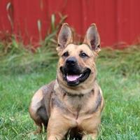 Adopt A Pet :: Casey-SPECIAL NEEDS - Elkhorn, WI