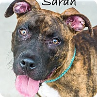Adopt A Pet :: Sarah - Dallas, TX