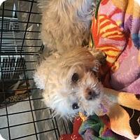 Adopt A Pet :: Lucy - Dothan, AL