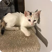 Adopt A Pet :: Snow White - Hazlet, NJ