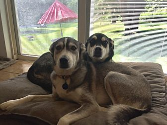 Husky Mix Dog for adoption in Sagaponack, New York - Murphy and Mackenzie