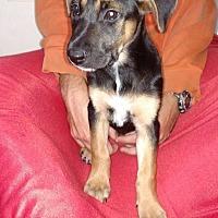 Adopt A Pet :: Juliette - Brattleboro, VT