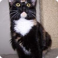 Adopt A Pet :: K-Hirsh1-Alexis - Colorado Springs, CO