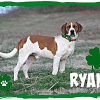Adopt A Pet :: Ryan - Marion, KY