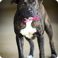 Adopt A Pet :: Hope - Greenville, SC